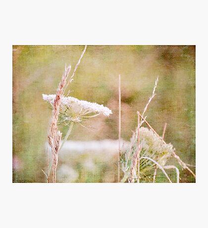 wild grass 18 Photographic Print