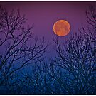 A spooky night's sky by Shirley Tinkham