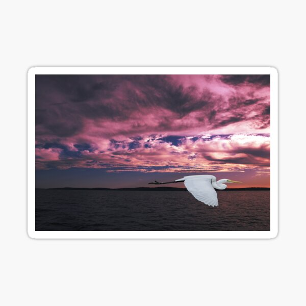 Great Egret at Sunset. Photo Art, Prints, Gifts. Sticker