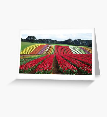Tulips at Table Cape Greeting Card