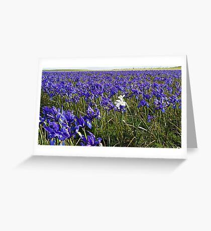 One White Iris Greeting Card