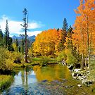 BISHOP CALIFORNIA IN THE FALL by MsLiz