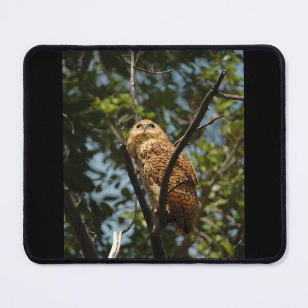 Pel's Fishing Owl Mouse Pad