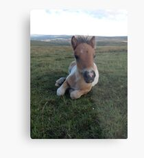 Mountain Foal Metal Print