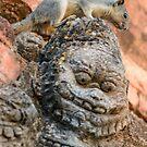 Temple Squirrel by Werner Padarin