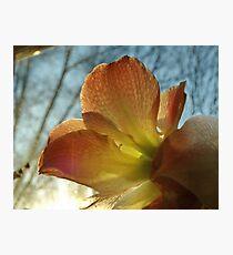 Amaryllis in the Window Photographic Print