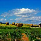Virginia Farm by Karen Checca