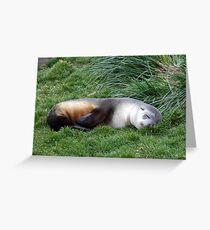 Sleepy Seal Greeting Card
