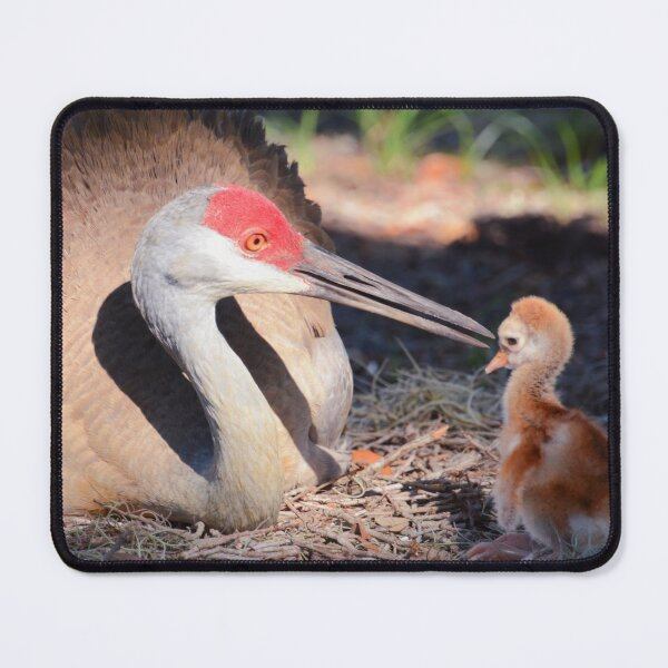 Sandhill with chick Mouse Pad