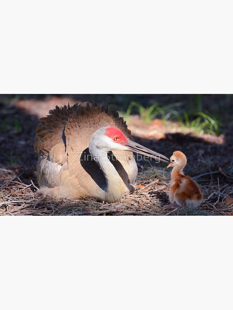 Sandhill with chick by ZinaStromberg