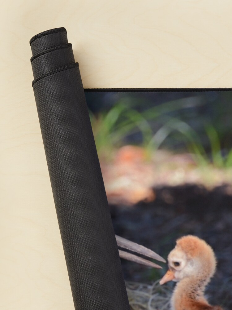 Alternate view of Sandhill with chick Mouse Pad