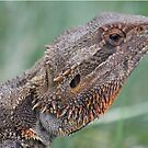 Bearded Dragon by Jodie Napier