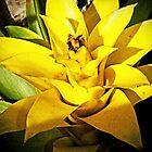 Bromeliad Yellow von Terri Chandler