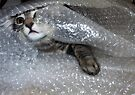 Mikino bubble-wrapped by Jaeda DeWalt
