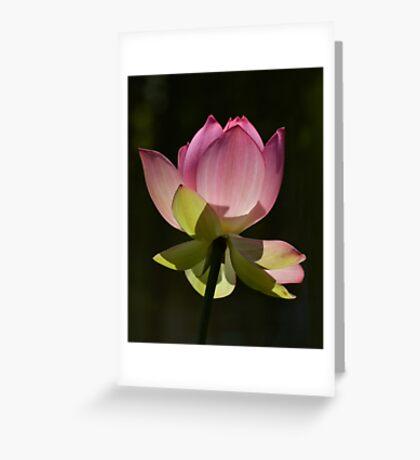 Filtering Light...... Greeting Card