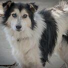 Greek dog by Riko2us
