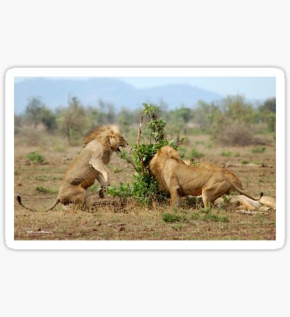 THIS IS SERIOUS - THE LION - Panthera leo - LEEU Sticker
