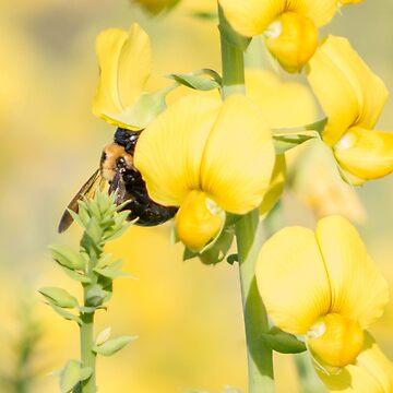Sweet Pollen by mechalamatthews