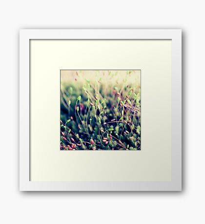 The Little Things Framed Print