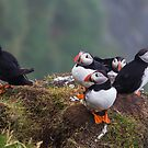 Puffins of Mykines by tinnieopener