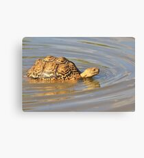 Tortoise Summer Swim - Natural Fun Canvas Print