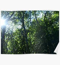 Sunlight streaming through the trees Poster