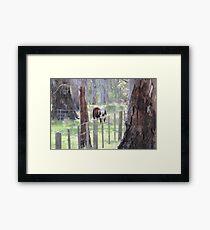 Riverland grazing Framed Print