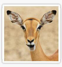 Impala Fun - Wildlife Humor from Africa.  Sticker