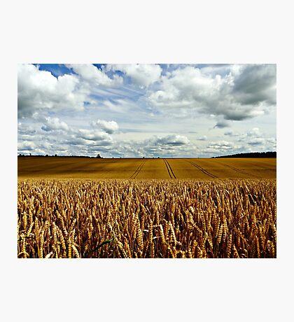 A Golden Harvest Photographic Print