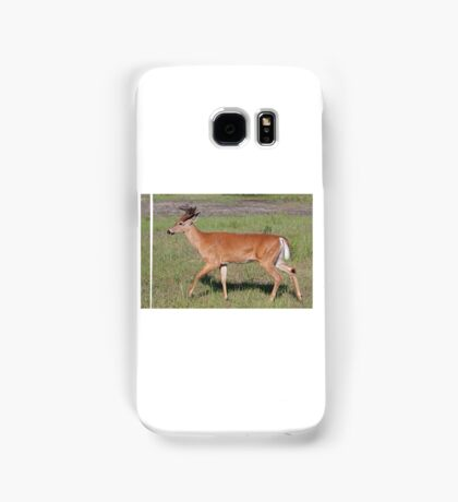 White-tailed deer with velvet antlers in spring Samsung Galaxy Case/Skin
