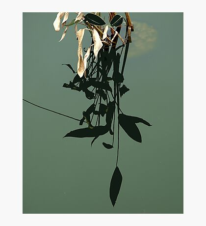 Reflections of Leaves Photographic Print