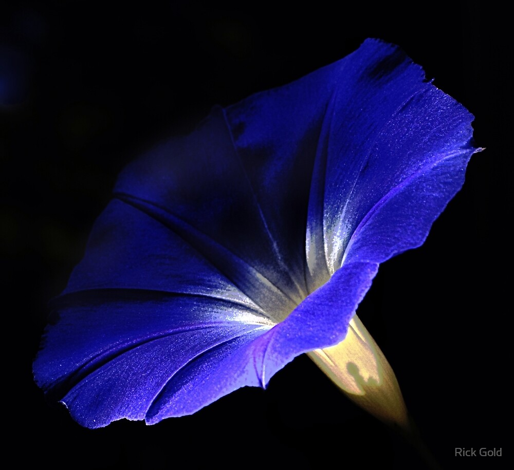 Morning Glory by Rick Gold
