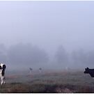 Cows in the Fog by Wayne King