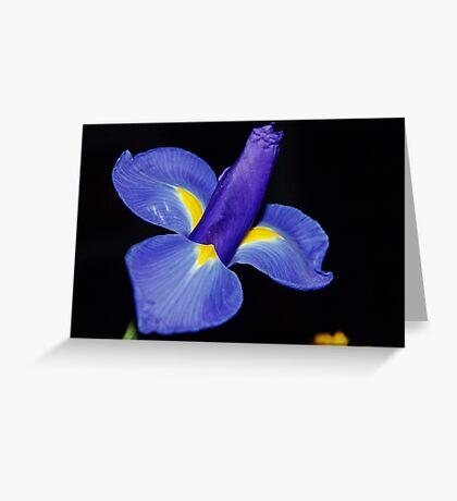 Violet Greeting Card