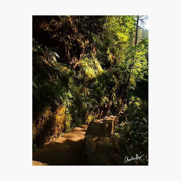 Down the path and around the bend Photographic Print