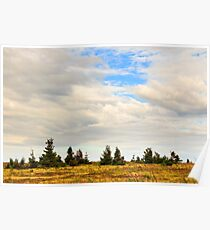 high wild plants at the mountain top Poster