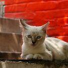 gato by Bernhard Matejka