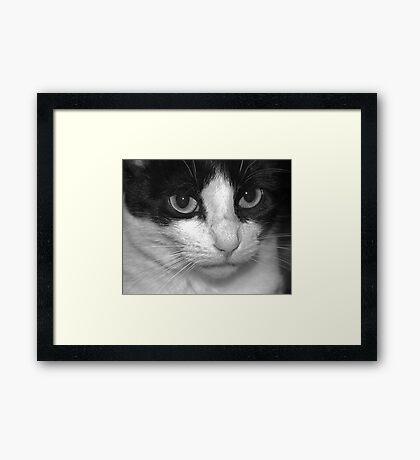 Zelda #3 Framed Print