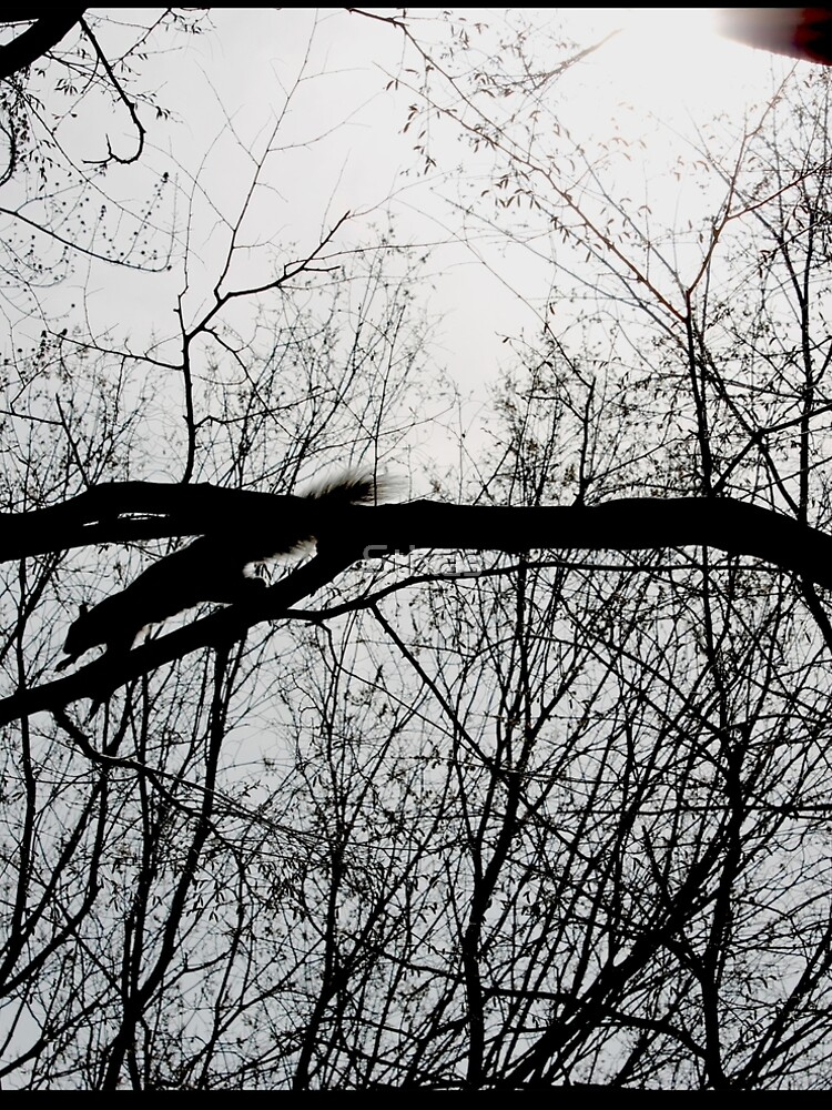 Squirrel in Central Park by Stixas