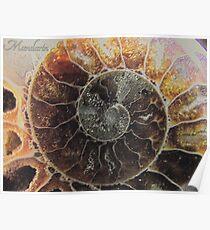 Ammonite Supermacro Poster