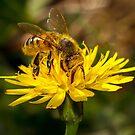 Honey Bee by RandyHume