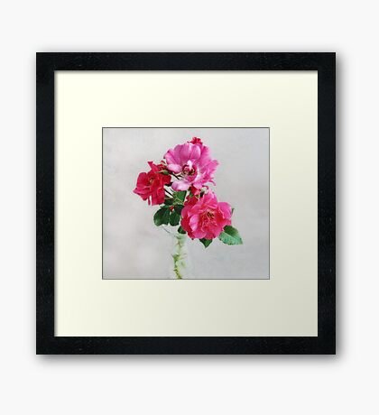 Three Old Fashioned Roses Framed Print
