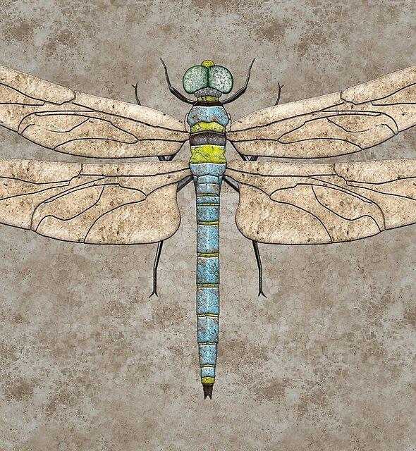 Dragonfly by Jeno Futo