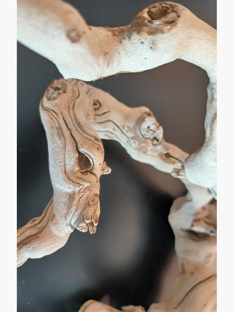 Dry Art  by znamenski