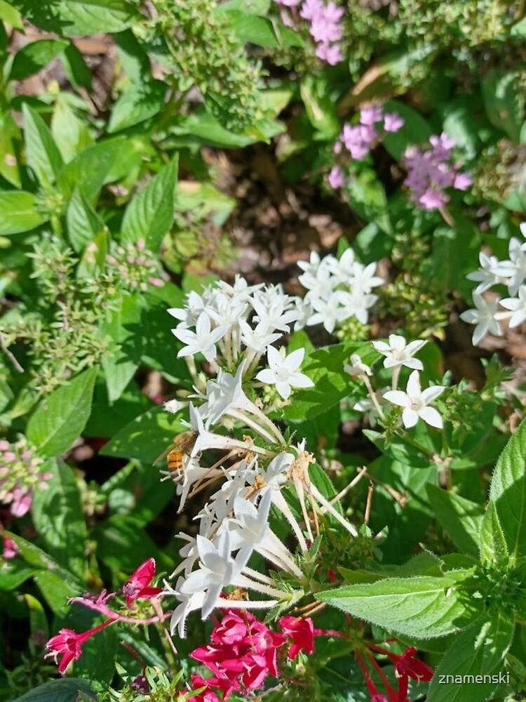 Butterfly Bush Plant Art  by znamenski