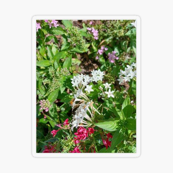Butterfly Bush Plant Art  Transparent Sticker