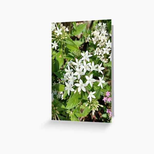 Lilies Art  Greeting Card