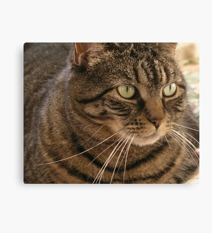 Rings around the collar Canvas Print