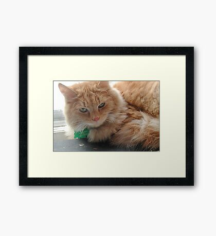 Touch me if you dare Framed Print