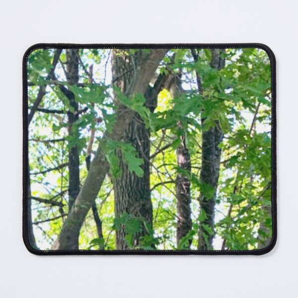 Forest Trees Mouse Pad